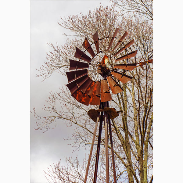 old windmill photography wall art