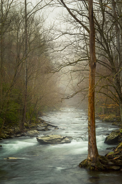 Smoky Mountain Stream Journal