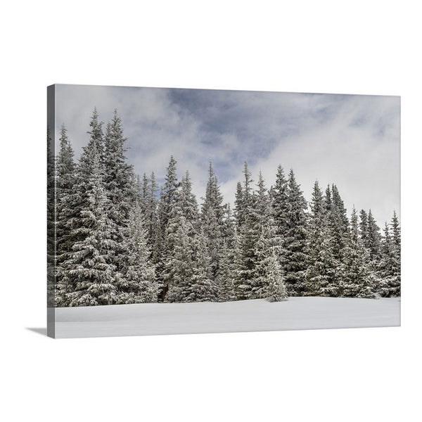 winter scene of snowy pines on a canvas print