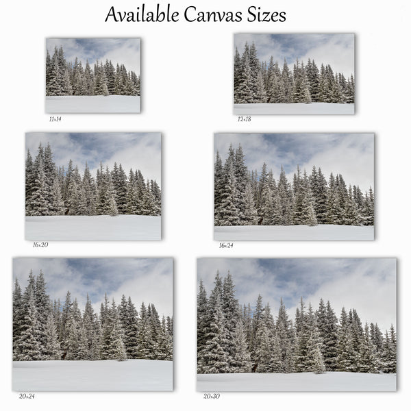 Snowy Pines Canvas