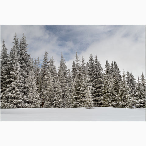 winter landscape of snowy pines at Hoosier Pass in Colorado