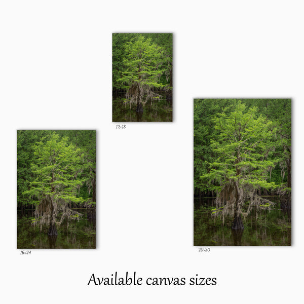Spring Cypress Tree Canvas