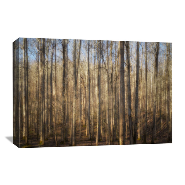 Light in the Forest Canvas