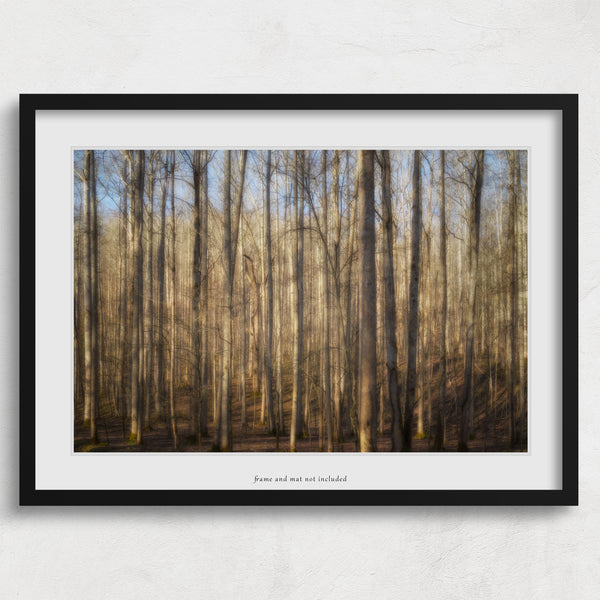 Light in the Forest Print