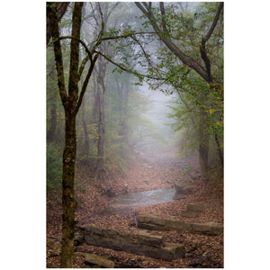 foggy forest trail in big south fork at yamacraw