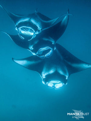 Collaboration between 7SEAS Jewelry and the Manta Trust