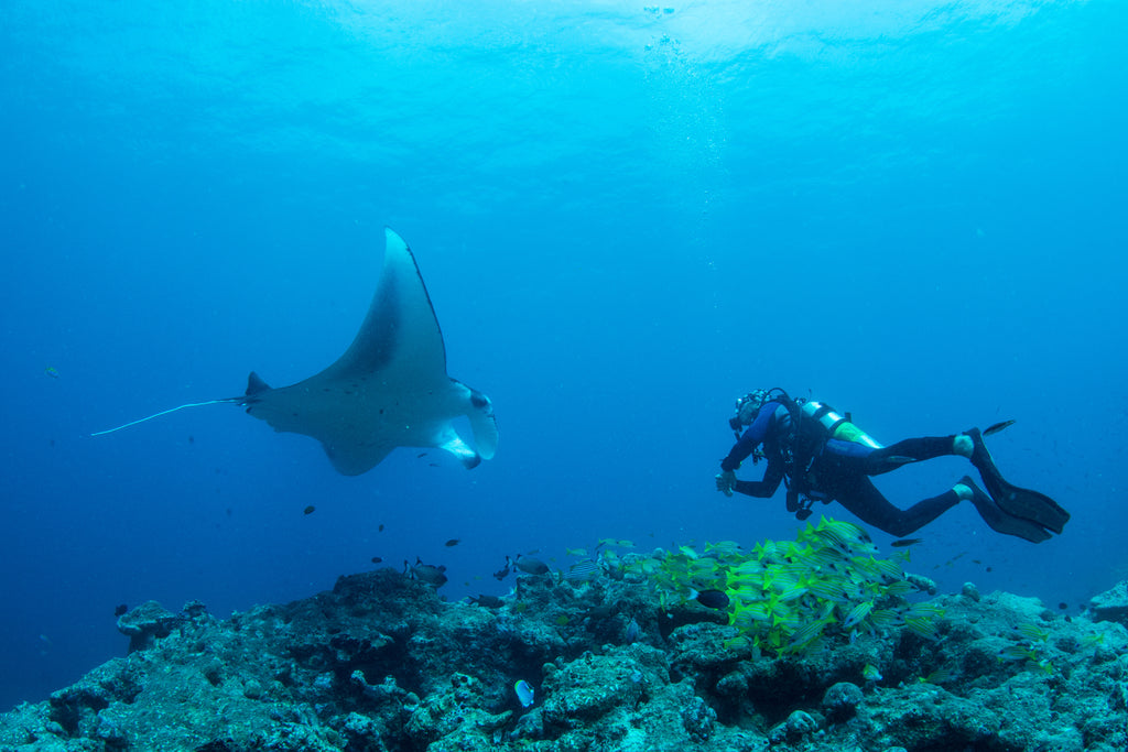7SEAS founder and manta ray in Maldives