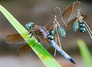 Dragonfly. Blue Earrings