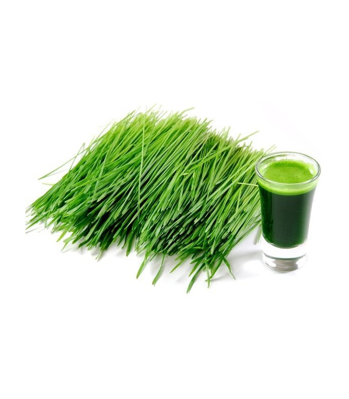 Wheatgrass Powder (Organic) / 有機小麥草粉