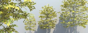 DOSCH 3D Trees & Conifers for Maxwell Render