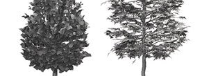 DOSCH 2D Viz Images Abstract - Trees