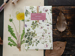 OURS Sticker Pack - Aquilegias