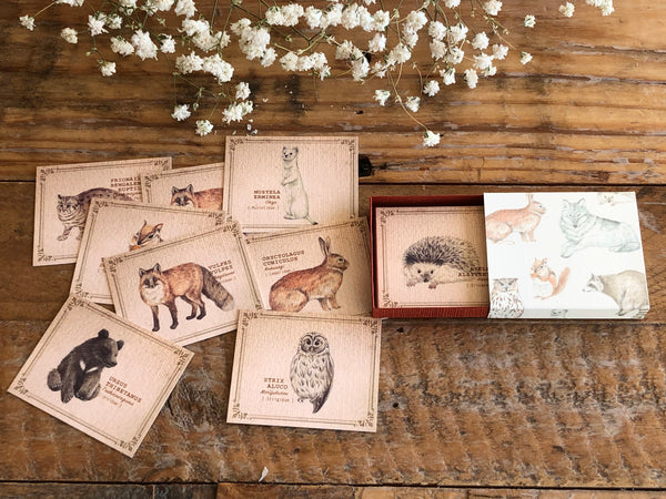 Picture Book Style Mini Message Cards in a matchbox / Forest Animals
