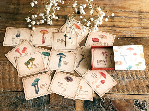 Picture Book Style Mini Message Cards in a matchbox / Mushroom