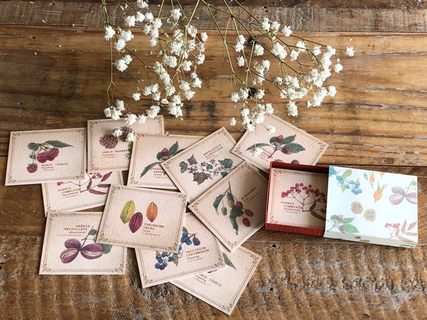 Picture Book Style Mini Message Cards in a matchbox / Tree Nuts