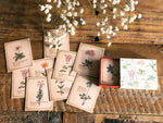 Picture Book Style Mini Message Cards in a matchbox / Alpine plant