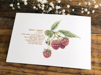 High Quality Paper Post Card / Raspberry