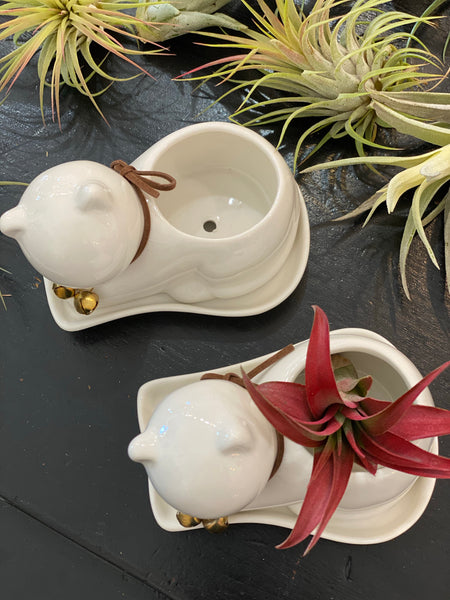 Mini Porcelain Cat Planter with Tray Saucer