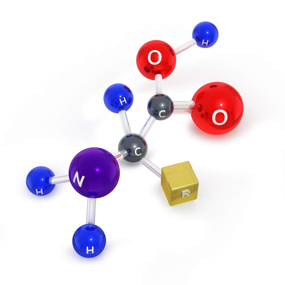 Amino acid molecule 3d model