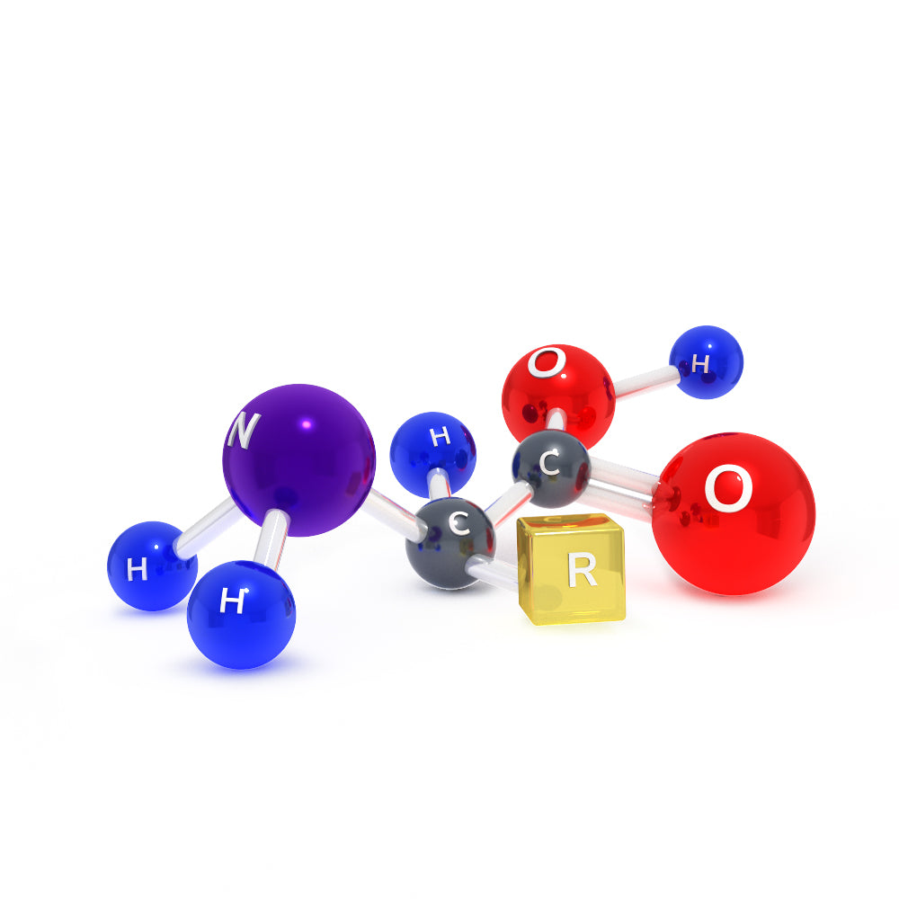 Amino acid basic structure 3d model