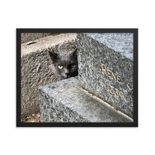 Cats in Cemetery 1 Framed Photograph
