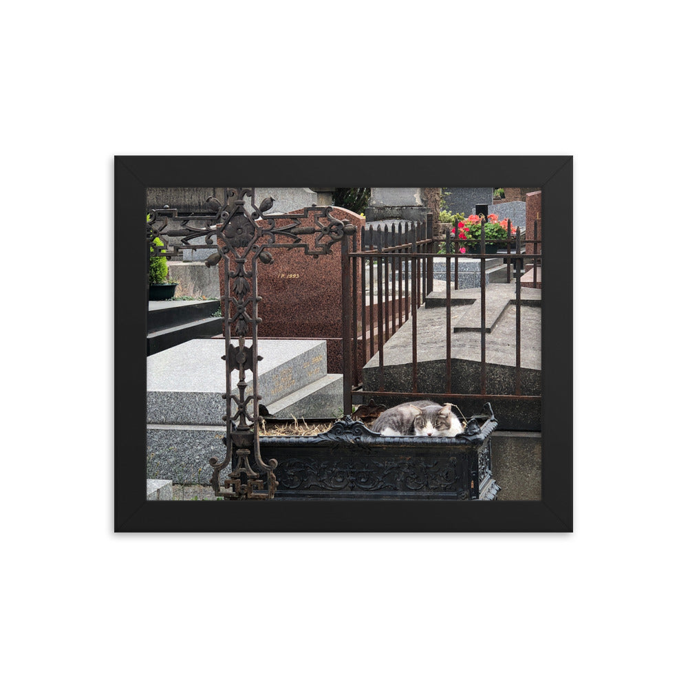 Cats in Cemetery 3 Framed Photograph
