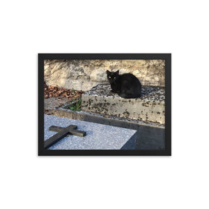 Cats in Cemetery 2 Framed Photograph