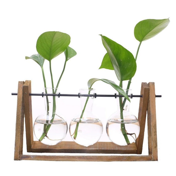 Plant terrarium with wooden stand - Gadget World