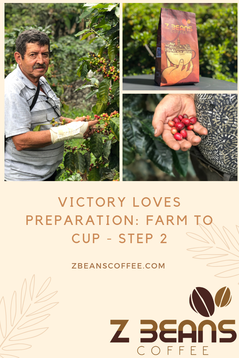 Victory Loves Preparation: Farm to Cup - Step 2 Ecuadorian coffee process