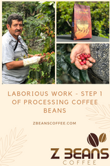 Best Ecuadorian Coffee Beans