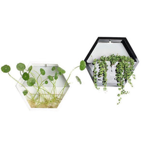 Hydroponic Wall Plant Vase