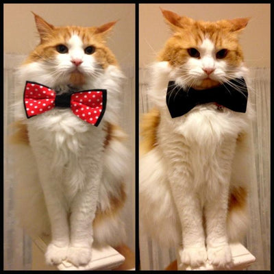 Purrfect Pet Bow Tie Suck UK