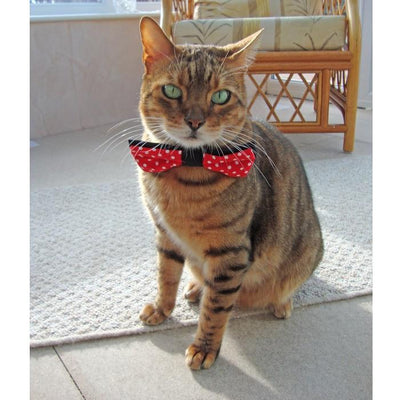 Purrfect Pet Bow Tie