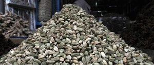 No takers for over-priced Indian cardamom at Dubai Food Expo