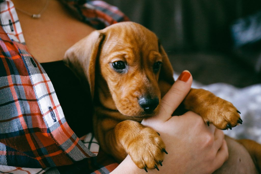 Live Oak Brand to Become Corporate Partner with Puppie Love