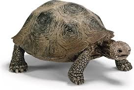 Schleich - Turtle https://babystuff.co.nz/products/schleich---turtle Did you know? Turtles are reptiles. Turtles have a hard shell that protects them like a shield, this upper shell is called a 'carapace'. Turtles also have a low... Sales channels Manage Available on 3 of 3  Online Store  Facebook Mobile App Organization Product type  toys Vendor  www.babystuff.co.nz Collections There are no collections available to add this product to. You can add a new collection or modify your existing collections.  Tags