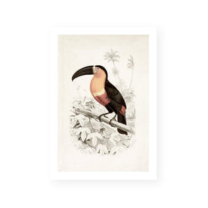 Botanic Antique / Toucan