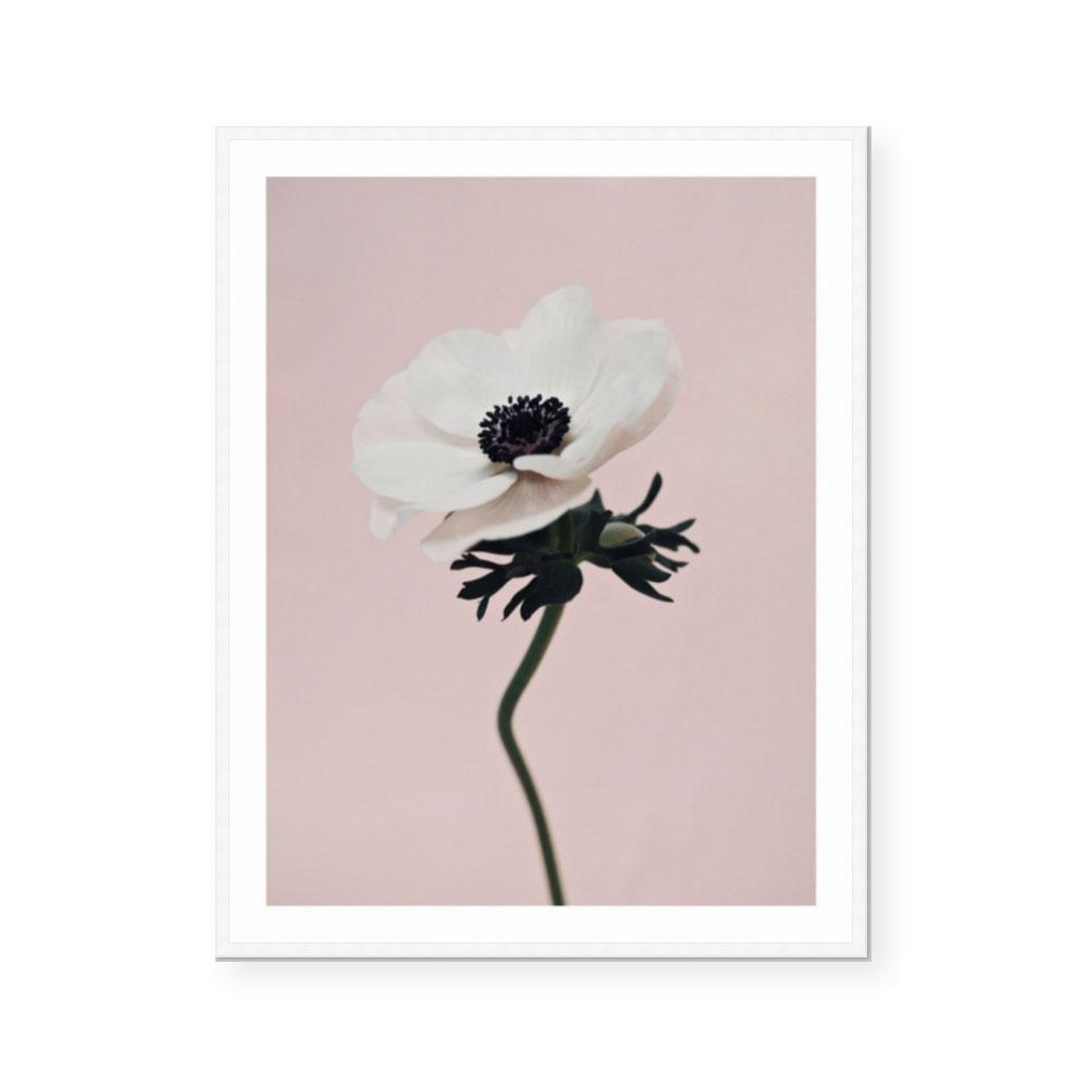 Coco | Open Edition Print | Katie Clulow