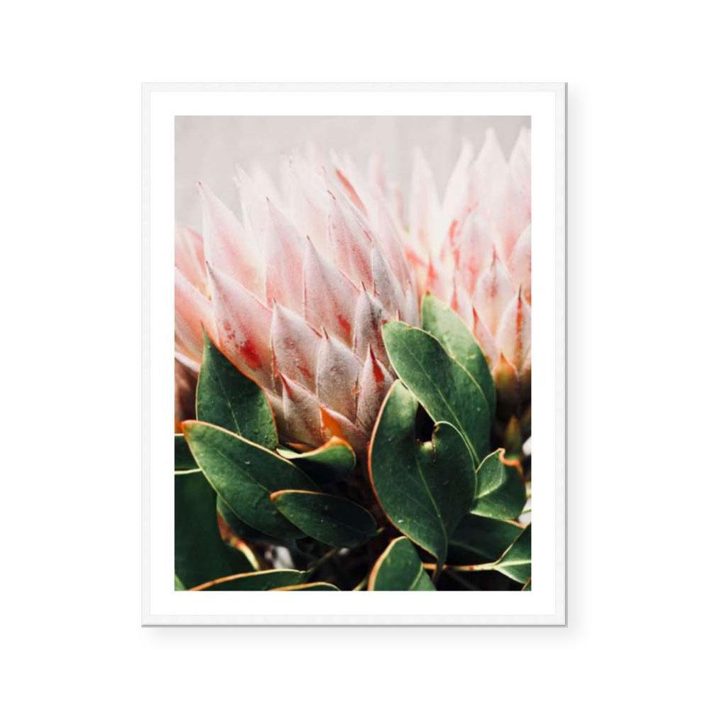 Holly | Fine Art Print | Katie Clulow