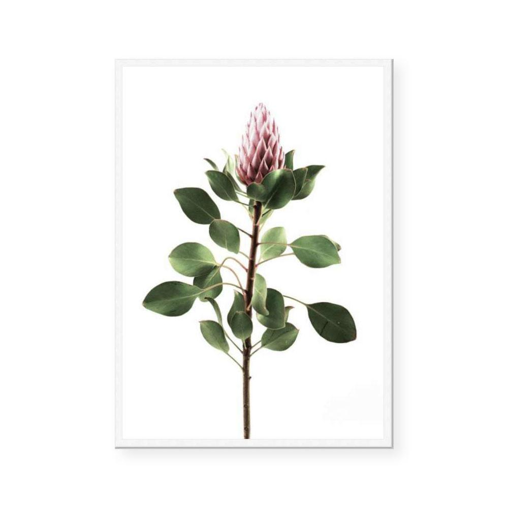 Long Stem Protea