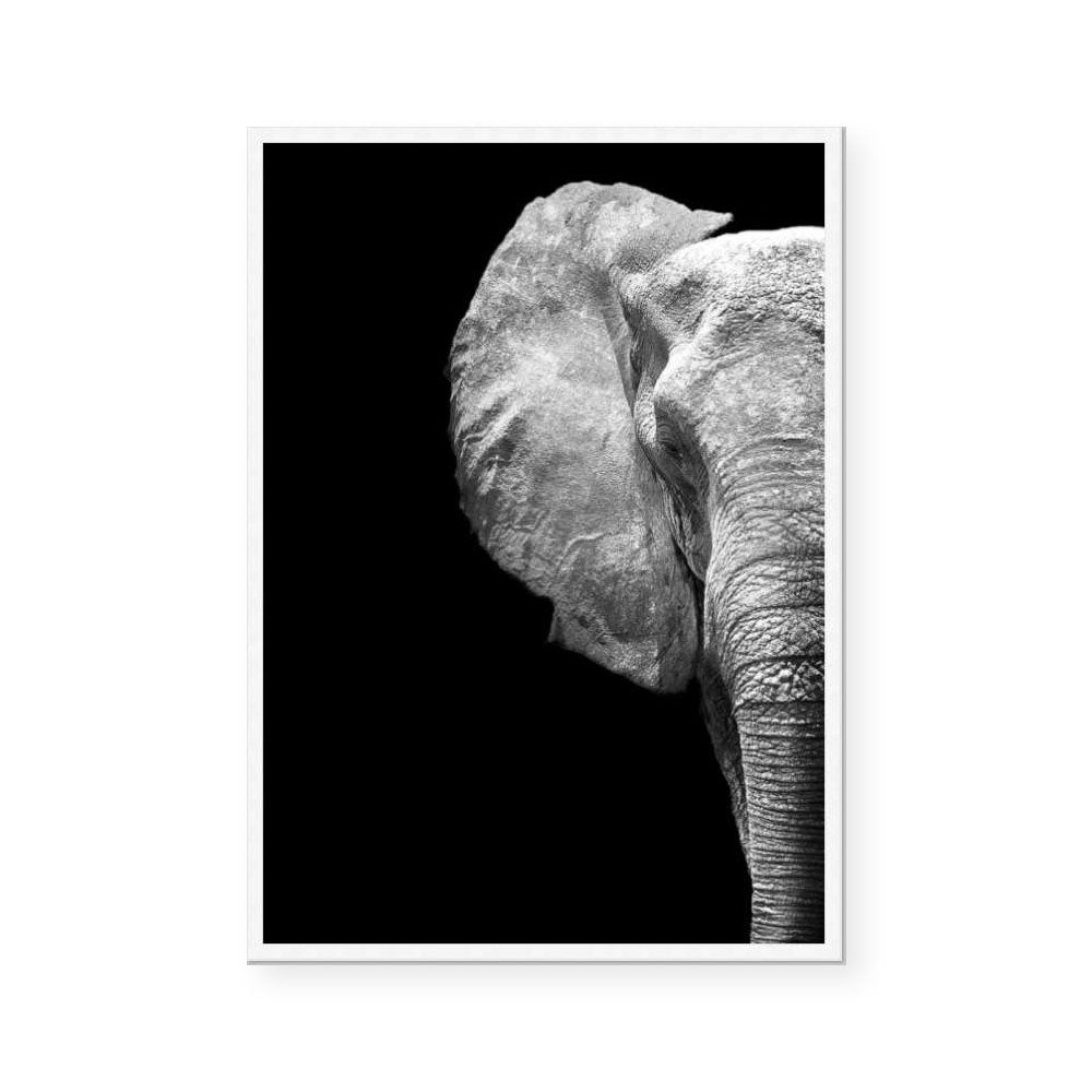 Monochrome Savanna / Elephant