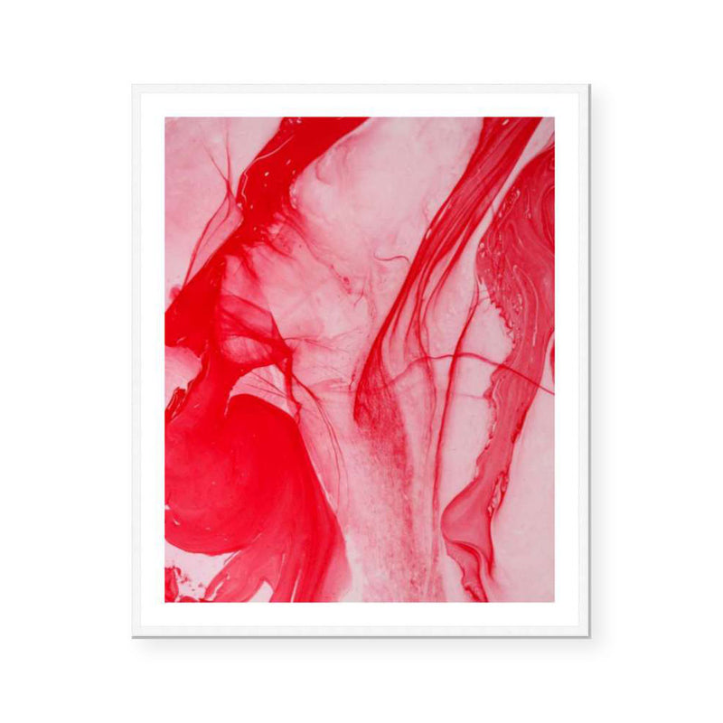 Waratah | Limited Edition Print | David Bottrell