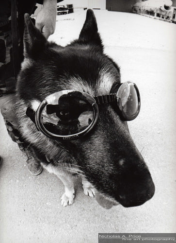 Cleared Hot:  DOGGLES