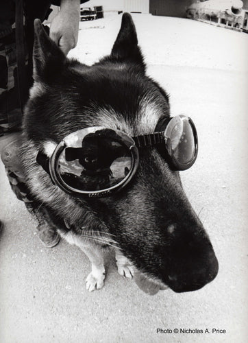 DOGGLES By Nicholas A. Price, 11 x 14 RC Pearl Print - Artnet Showcase