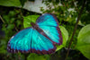 Azure Wings