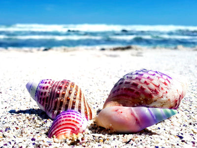 Rainbow Seashells