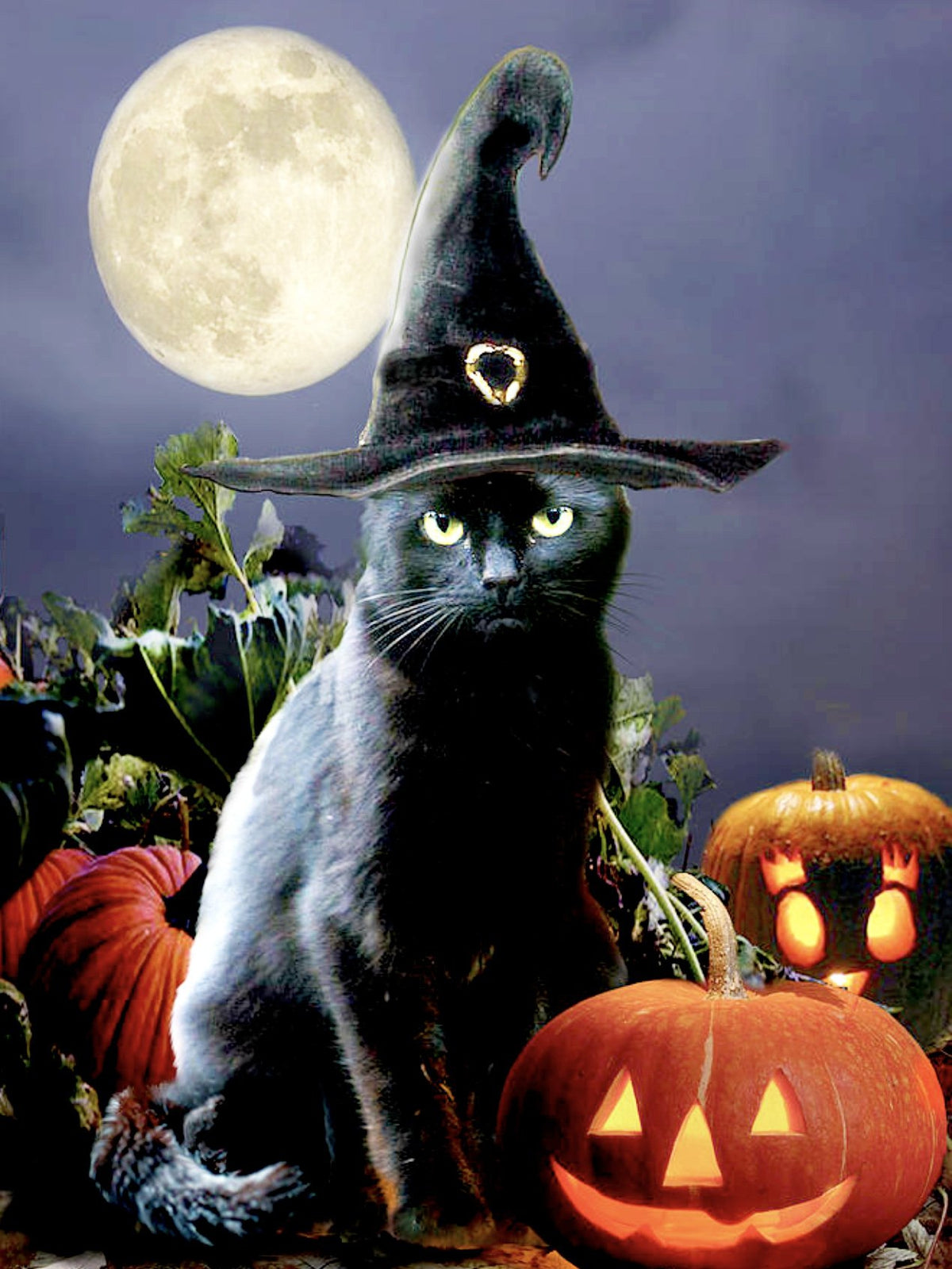 Witchy Black Halloween Cat