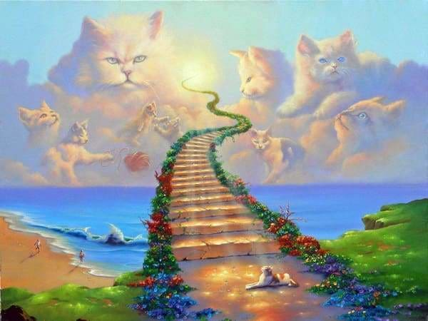 Religious Diamond Painting Kit - All Cats Go To Heaven-Square 15x20cm- - Paint With Diamonds