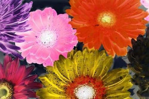 Abstract Diamond Painting Kit - Colorful Gerbera-Square 20x30cm-