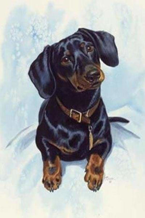 Dog Diamond Painting Kit - Curious Hot Dog- - Paint With Diamonds
